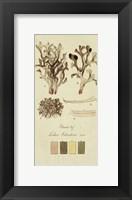 Framed Species of Lichen V