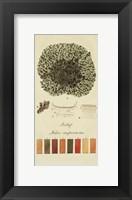 Framed Species of Lichen VI