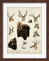 Framed Western Animal Species I