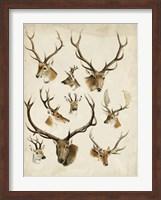 Framed Western Animal Species II