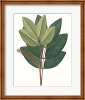 Framed Fall Foliage IV