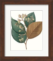 Framed Fall Foliage V