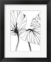 Framed Linear Tropics I