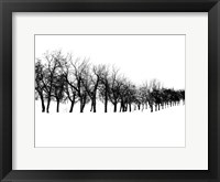 Framed Row of trees in snow
