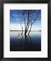 Framed Tree Petrie Island