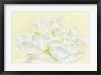 Framed Soft White Peony