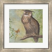 Framed Eagle-Owl