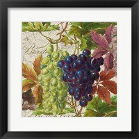 Framed Vintage Fruits III Grapes