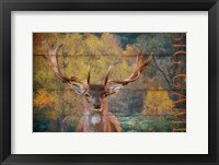 Framed Big Game Deer