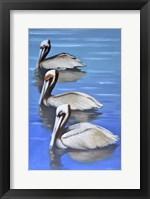 Framed Three Pelicans