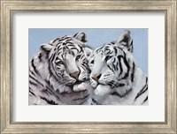 Framed Loving White Tigers