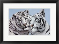 Framed Loving White Tigers