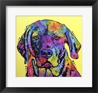 Framed Fixate Labrador