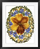 Framed Dried Flowers 2