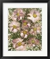 Framed Dried Flowers 32