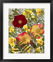Framed Dried Flowers 38