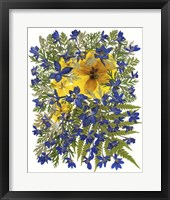 Framed Dried Flowers 42