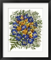 Framed Dried Flowers 43