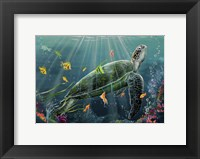 Framed Reef Turtle