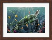 Framed Reef Turtle