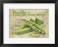 Framed Pisello Pisum Sativum