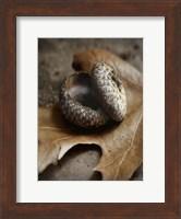 Framed Autumn Treasures
