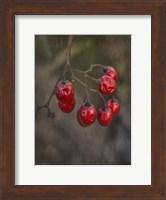 Framed Berries 2