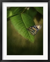 Framed Butterfly Leaf