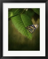 Framed Butterfly Leaf