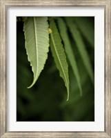 Framed Greens 1
