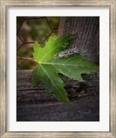 Framed Leaf