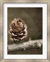 Framed Pinecone
