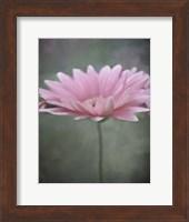 Framed Pink Bloom 1