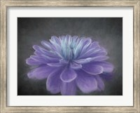 Framed Purple Passion