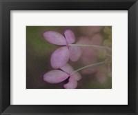 Framed Soft Petals