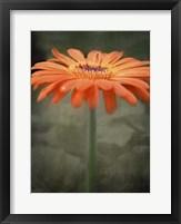Framed Tangerine