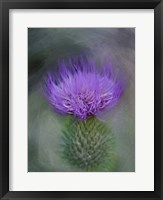 Framed Thistle