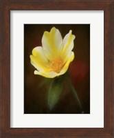 Framed Yellow Bloom