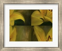 Framed Lily Abstract