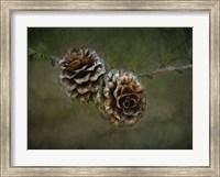 Framed 2 Pinecones
