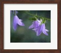 Framed Purple Bells