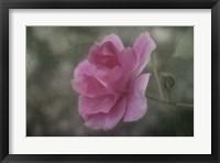 Framed Pink Petals