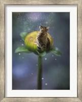 Framed Fantasy Cat