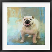 Framed White English Bulldog