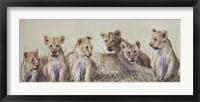 Framed Cubs