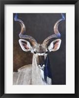 Framed Greater Kudu