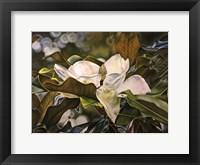Framed Magnolia Bloom 3