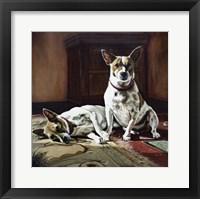 Framed Sunny dogs 1