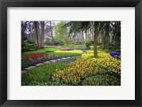 Framed Colorful Corner Keukenhof Tulips Garden 4