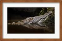 Framed Crocodile Smile